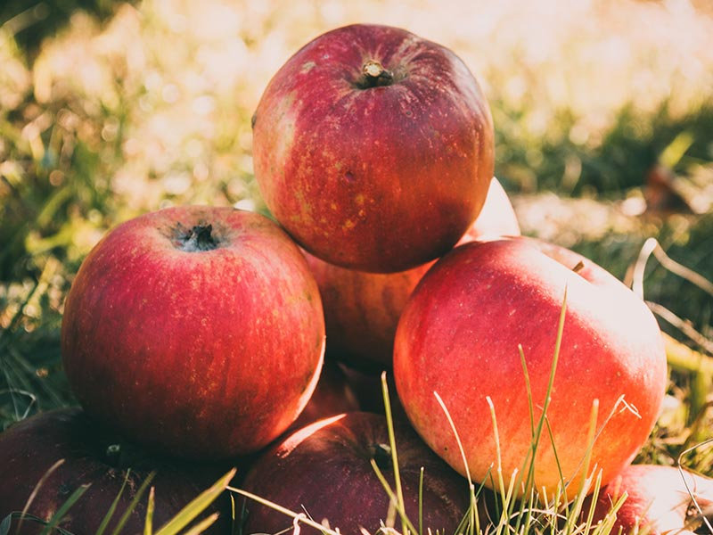 What is the best way to store apples for winter